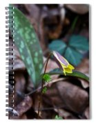 Yellow Trout Lily 2 Spiral Notebook