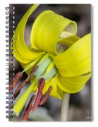 Yellow Trout Lily Spiral Notebook
