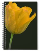 Yellow Tulip Open On Black Spiral Notebook