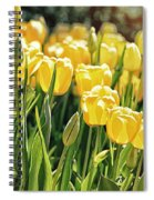 Yellow Tulip Panoramic Spiral Notebook