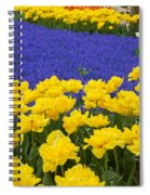 Yellow Tulips And Blue Muscari In Dutch Garden Spiral Notebook