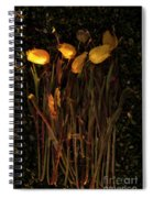 Yellow Tulips Decaying At Sunset Spiral Notebook