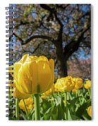 Yellow Tulips In The Public Garden Boston Ma Spiral Notebook