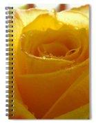 Yellow Valentine Roses - 4 Spiral Notebook