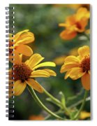 Yellow Wildflowers 3680 H_2 Spiral Notebook