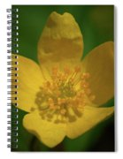 Yellow Wood Anemone 1 Spiral Notebook