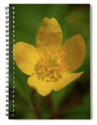 Yellow Wood Anemone 2 Spiral Notebook