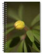 Yellow Wood Anemone 4 Spiral Notebook