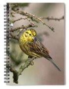 Yellowhammer Spiral Notebook