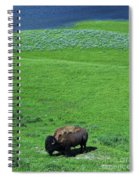Yellowstone Bison  Spiral Notebook