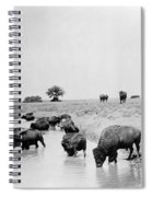 Yellowstone: Bison, C1905 Spiral Notebook
