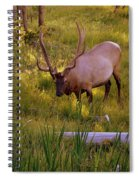 Yellowstone Bull Spiral Notebook