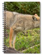 Yellowstone Coyote Scout Spiral Notebook