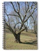 Yellowwood Tree In Winter Spiral Notebook