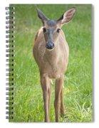 Yes Deer Spiral Notebook