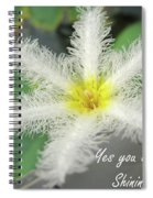 Yes You Are A Pure Shining Star Spiral Notebook