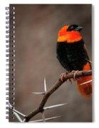 Yikes Spikes - Red Bishop Weaver Bird Spiral Notebook