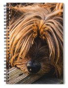 Yorkshire Terrier Biting Wood Spiral Notebook