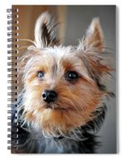 Yorkshire Terrier Dog Pose #3 Spiral Notebook