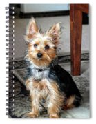 Yorkshire Terrier Dog Pose #6 Spiral Notebook