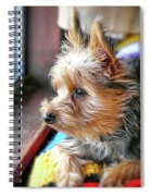Yorkshire Terrier Dog Pose #8 Spiral Notebook