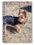 Yorkshire Terrier Dog Pose #9 Spiral Notebook