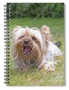 Yorkshire Terrier Is Smiling At The Camera Spiral Notebook