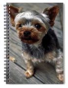 Yorkshire Terrier Puppy Spiral Notebook