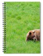 Yosemite Bear Spiral Notebook