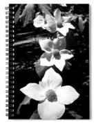 Yosemite Dogwoods Black And White Spiral Notebook