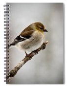 Young American Golden Finch 1 Spiral Notebook