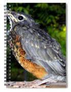 Young American Robin Spiral Notebook