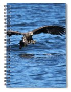 Young Bald Eagle I Spiral Notebook
