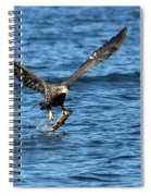 Young Bald Eagle II Spiral Notebook