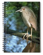 Young Black Crowned Night Heron Spiral Notebook