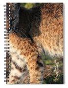 Young Bobcat 01 Spiral Notebook