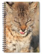 Young Bobcat 02 Spiral Notebook