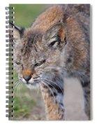 Young Bobcat 03 Spiral Notebook