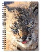 Young Bobcat 04 Spiral Notebook