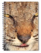 Young Bobcat Portrait 01 Spiral Notebook