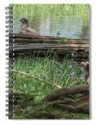 Young Buck Watching Eagle Spiral Notebook