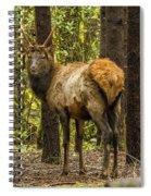 Young Bull Elk Spiral Notebook