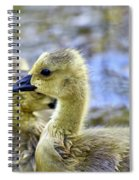 Young Canadain Goose Spiral Notebook