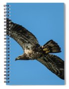 Young Eagle Color Spiral Notebook