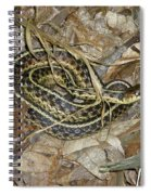 Young Eastern Garter Snake - Thamnophis Sirtalis Spiral Notebook