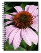 Young Echinacea Bloom Spiral Notebook