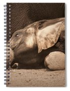 Young Elephant Lying Down Spiral Notebook