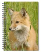 Young Fox Spiral Notebook