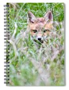 Young Fox Kit Hiding In Tall Grass Spiral Notebook