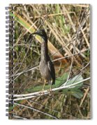 Young Green Heron  Spiral Notebook